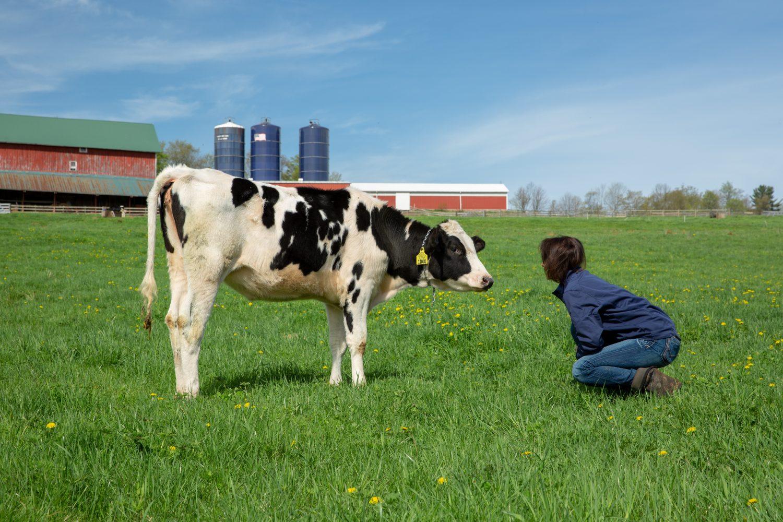 farm stay catskills